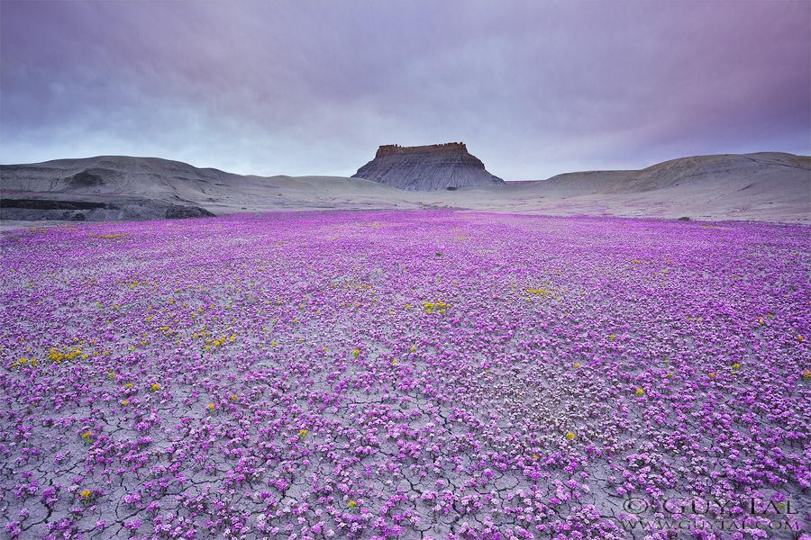 Guy Tal, Badlands in Bloom