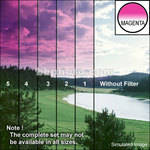 "Tiffen 3 x 4"" 1 Magenta Hard-Edge Graduated Filter (Horizontal Orientation)"