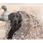 PRIMOS Mutt Hutt II Dog Blind for Hunting (Realtree Max-5)