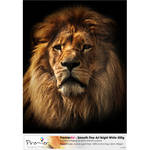 "Premier Imaging Smooth Fine Art Bright White Paper (500 gsm, 44 x 60"", 10 Sheets)"