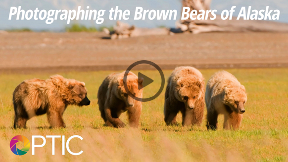 photographing-brown-bears-alaska
