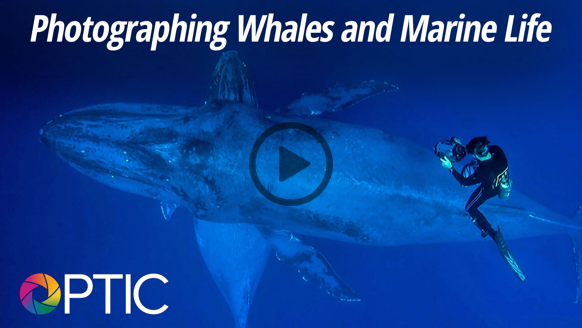 photographing-whales-marine-life.png