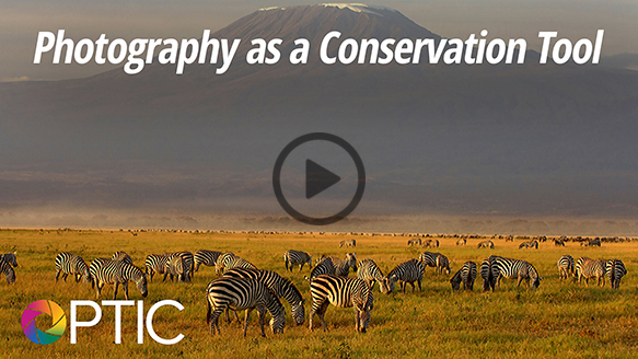 photography-as-conservation-tool